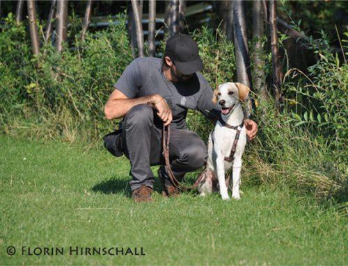 Der Hundetrainer weiß schon, was er tut!